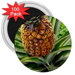 Pineapple 2 3  Magnets (100 Pack) by trendistuff
