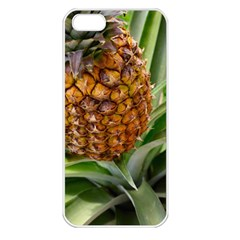 Pineapple 2 Apple Iphone 5 Seamless Case (white) by trendistuff