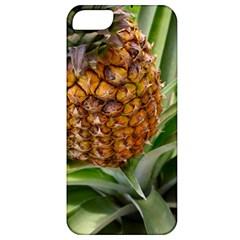 Pineapple 2 Apple Iphone 5 Classic Hardshell Case by trendistuff