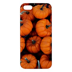 Pumpkins 2 Apple Iphone 5 Premium Hardshell Case by trendistuff