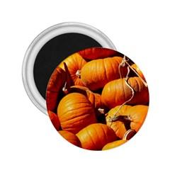Pumpkins 3 2 25  Magnets by trendistuff