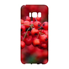 Red Berries 1 Samsung Galaxy S8 Hardshell Case  by trendistuff