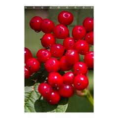 Red Berries 2 Shower Curtain 48  X 72  (small)  by trendistuff