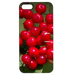 Red Berries 2 Apple Iphone 5 Hardshell Case With Stand by trendistuff