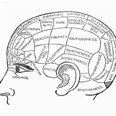 Brain Chart Diagram Face Fringe Canvas 16  X 20