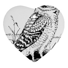 Animal Bird Forest Nature Owl Ornament (heart) by Nexatart