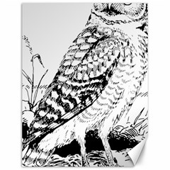 Animal Bird Forest Nature Owl Canvas 12  X 16