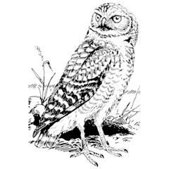 Animal Bird Forest Nature Owl 5 5  X 8 5  Notebooks