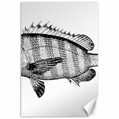 Animal Fish Ocean Sea Canvas 24  X 36