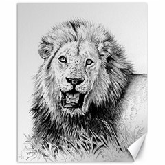 Lion Wildlife Art And Illustration Pencil Canvas 16  X 20