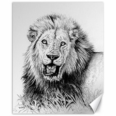 Lion Wildlife Art And Illustration Pencil Canvas 11  X 14