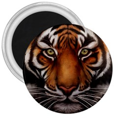 The Tiger Face 3  Magnets by Nexatart