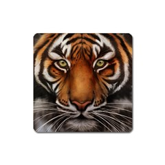 The Tiger Face Square Magnet