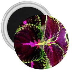 Plant Purple Green Leaves Garden 3  Magnets