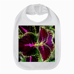 Plant Purple Green Leaves Garden Amazon Fire Phone