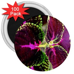 Plant Purple Green Leaves Garden 3  Magnets (100 Pack)