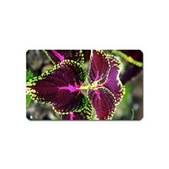 Plant Purple Green Leaves Garden Magnet (name Card)