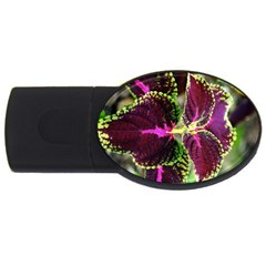 Plant Purple Green Leaves Garden Usb Flash Drive Oval (2 Gb)