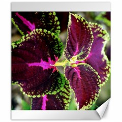 Plant Purple Green Leaves Garden Canvas 20  X 24