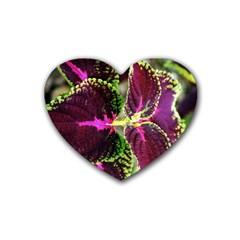 Plant Purple Green Leaves Garden Heart Coaster (4 Pack)