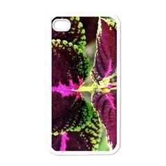 Plant Purple Green Leaves Garden Apple Iphone 4 Case (white)