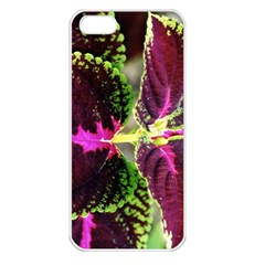 Plant Purple Green Leaves Garden Apple Iphone 5 Seamless Case (white)