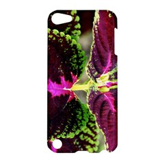 Plant Purple Green Leaves Garden Apple Ipod Touch 5 Hardshell Case by Nexatart
