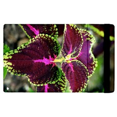 Plant Purple Green Leaves Garden Apple Ipad 2 Flip Case