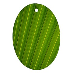 Green Leaf Pattern Plant Ornament (oval) by Sapixe
