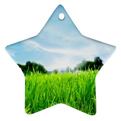 Green Landscape, Green Grass Close Up Blue Sky And White Clouds Ornament (star)