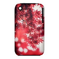 Maple Leaves Red Autumn Fall Iphone 3s/3gs by Sapixe