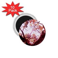 Highland Park 12 1 75  Magnets (10 Pack)