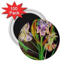 Dscf1378   Irises On The Black 2 25  Magnets (100 Pack)  by bestdesignintheworld