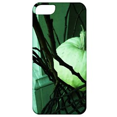 Pumpkin 7 Apple Iphone 5 Classic Hardshell Case