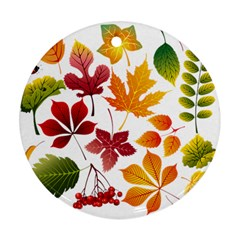 Beautiful Autumn Leaves Vector Ornament (round)