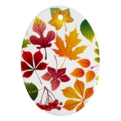 Beautiful Autumn Leaves Vector Ornament (oval)