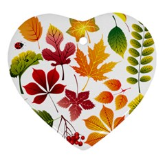 Beautiful Autumn Leaves Vector Ornament (heart)