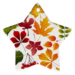 Beautiful Autumn Leaves Vector Ornament (star)