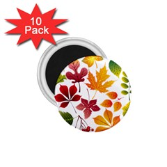 Beautiful Autumn Leaves Vector 1 75  Magnets (10 Pack)