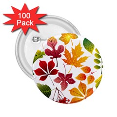Beautiful Autumn Leaves Vector 2 25  Buttons (100 Pack)