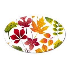 Beautiful Autumn Leaves Vector Oval Magnet