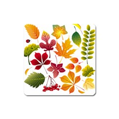 Beautiful Autumn Leaves Vector Square Magnet