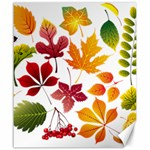 Beautiful Autumn Leaves Vector Canvas 20  x 24   24 x20 Canvas - 1