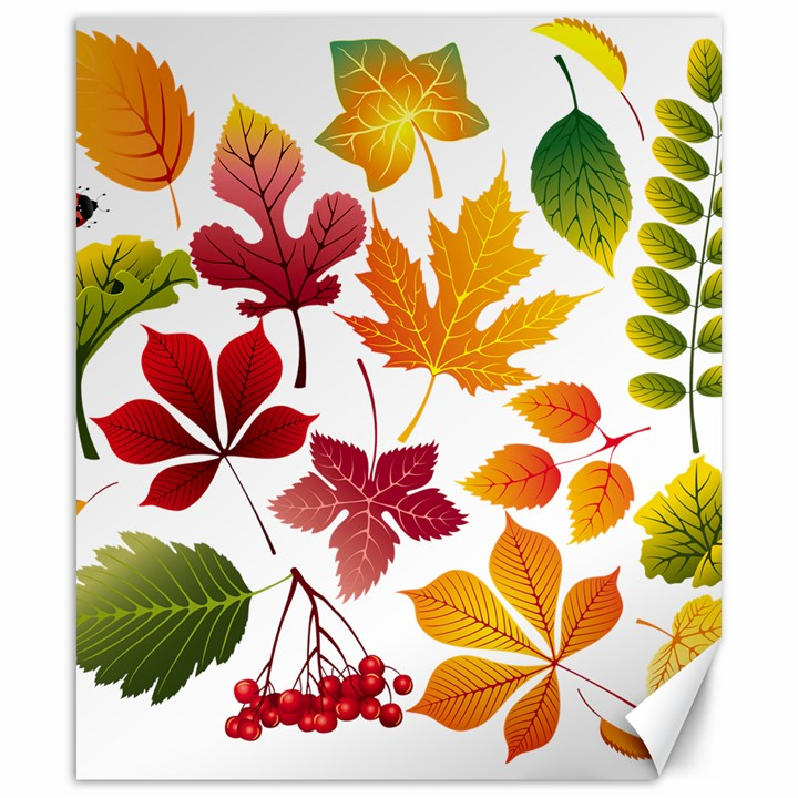 Beautiful Autumn Leaves Vector Canvas 20  x 24