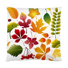 Beautiful Autumn Leaves Vector Standard Cushion Case (two Sides)