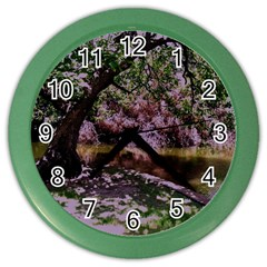 Old Tree 6 Color Wall Clocks