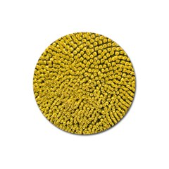 Sunflower Head (helianthus Annuus) Hungary Felsotold Magnet 3  (round)