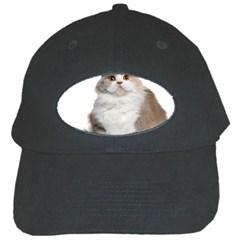 Cutefat Cat  Black Cap