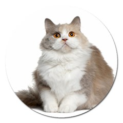 Cutefat Cat  Magnet 5  (round)