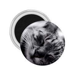 Adorable Animal Baby Cat 2 25  Magnets